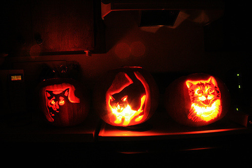 modcatlove:  A Caturday Collection: Kitty Pumpkins! The Pumpkin Pride by Palmer Digital Studio