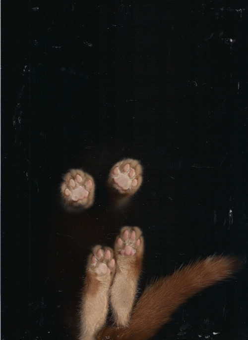 2headedsnake:  likemustardgasandroses.blogspot.com j. l. williams - cat scan