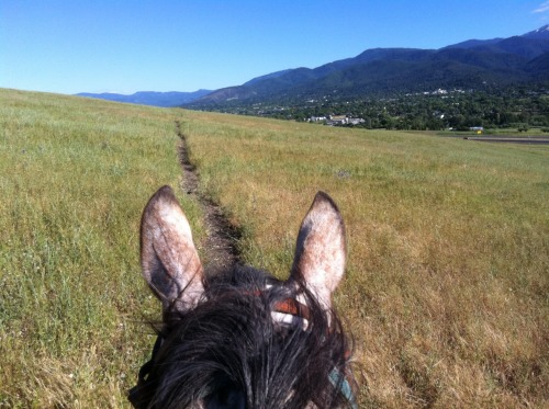 Exploring Ashland, OR on horseback