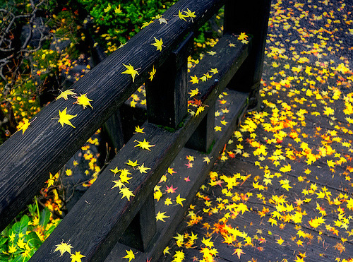 onlycutes:  Autumn Leaves in Portland's Japanese Garden