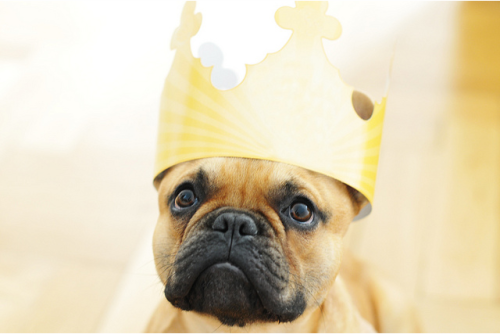 squishfacedogs:  The King.
