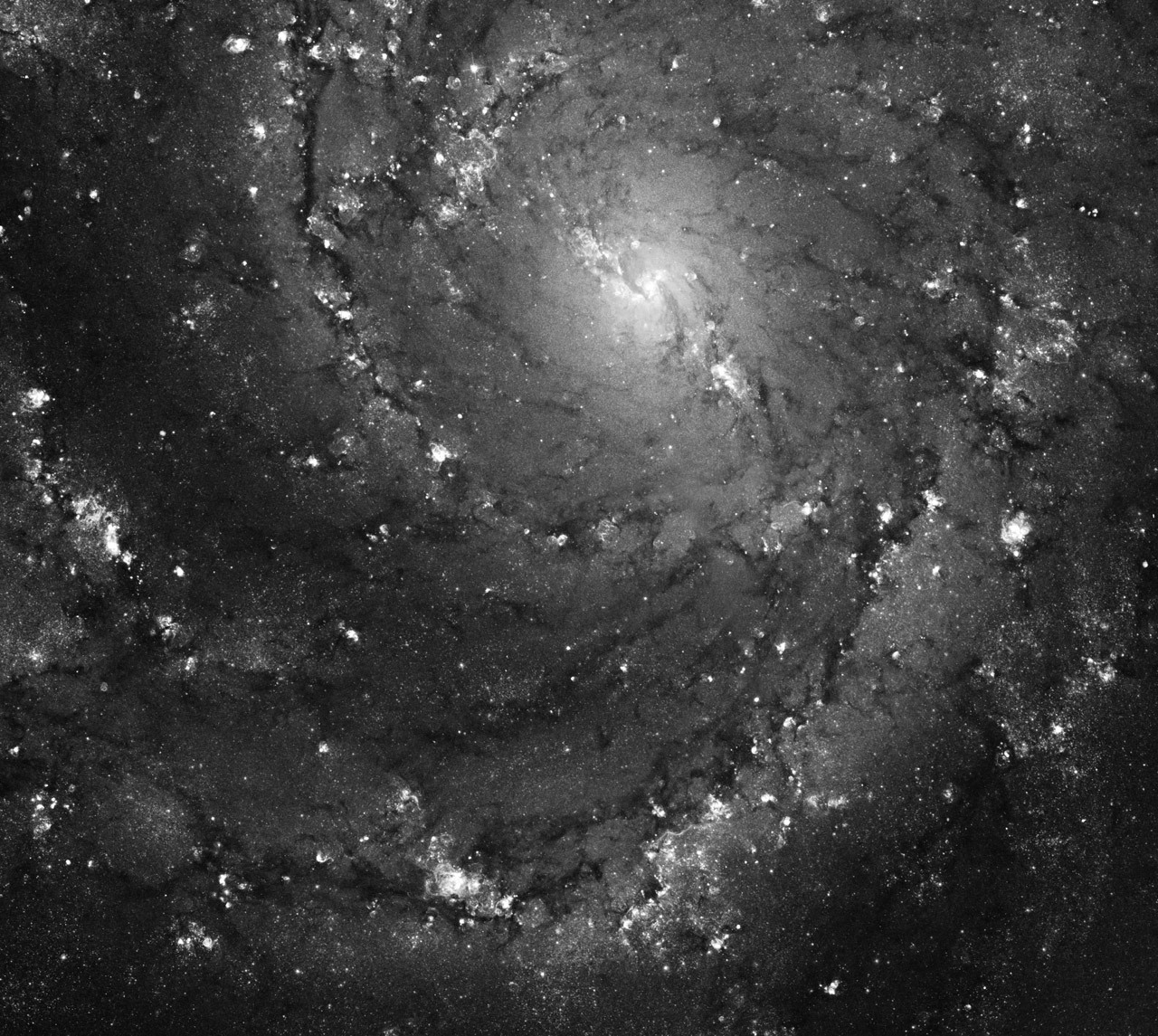 cordisre:  Hot Gas and Star Birth in M101  I stared at the Big Dipper for a long time last night, figuring that eventually we'd both be looking at it.