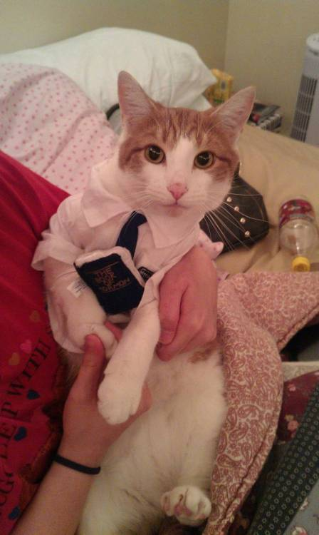 fuckyeahcats:  The Book of Meowmon.Gypsy is ready for Halloween!   HA
