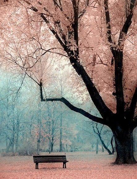 tumblr_ltej71x8JJ1qdv1pko1_500_large.jpg (park bench,pink,blue,trees)