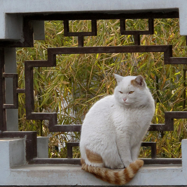 "Small Wild Goose Pagoda ""Temple Cat"", Xi'an by thewamphyri on Flickr."