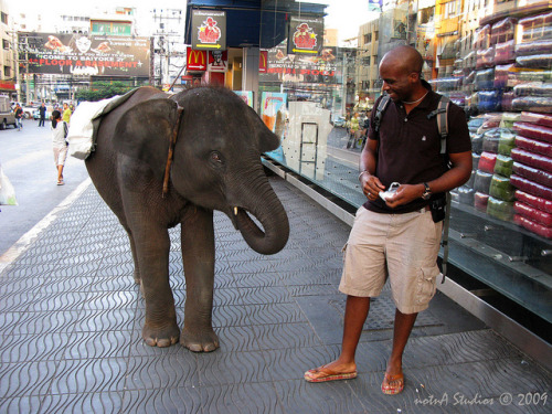 elephant feeding downtown Bangkok by notnA on Flickr.