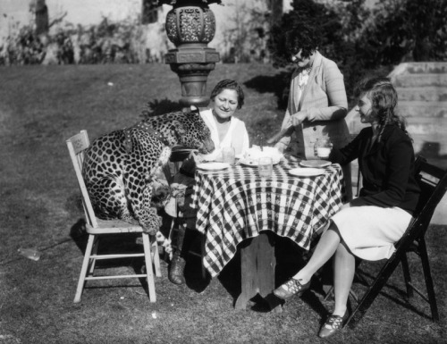 Three ladies have lunch with a leopard at the Luna Park Zoo in Los Angeles, CA - c.1920s