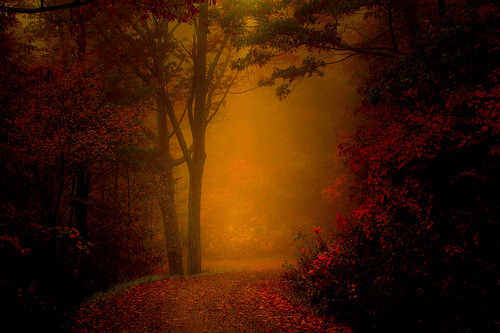 Path through the Autumn Mist (by ☩ D L Ennis)