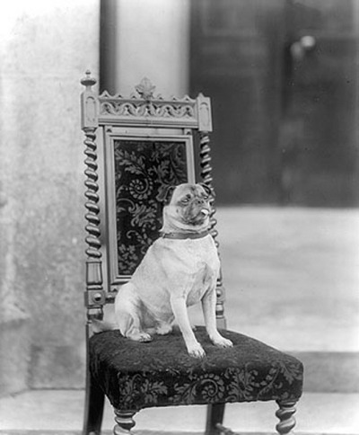 Top Dog by National Library of Ireland on The Commons on Flickr.