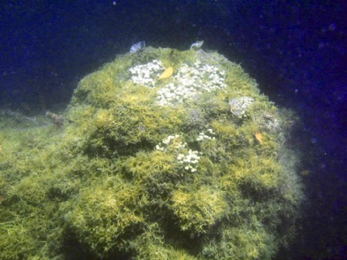 Researchers find that Native Hawaiian islanders began practicing reef  conservation activities during the 1400s, and the ecosystem recovered  over the next 400 years.