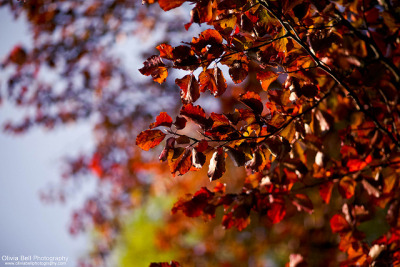Vibrancy of Autumn on Flickr.