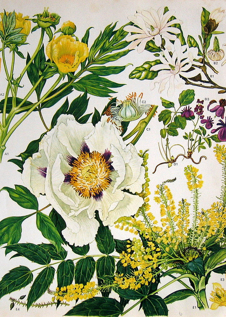 theposhlist:  jomobimo:  Botanical - Yellow & White  22. Ah, botanical prints. Just like Portmeirion dishes and the conservatories of posh British country homes.