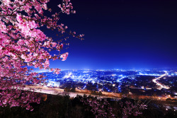 lori-rocks: A Highway and Cherry Blossoms  by Kokix