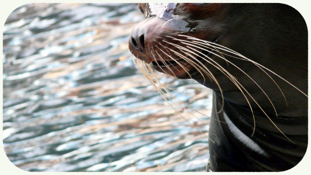 - sea lion - Busy. busy busy busy. Please enjoy this sea lion Busy.