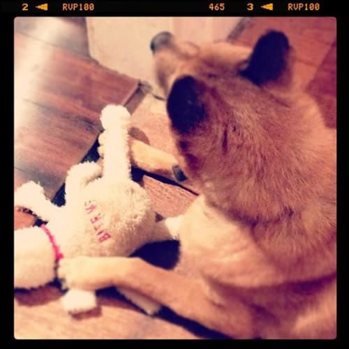 The toy stealer :) (Taken with instagram) 10.24.11