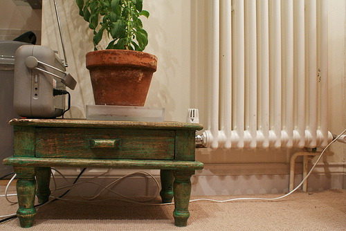 This is our Stevia plant on his street-found mini table. The plant's name is Buscemi.