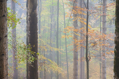 atomos:  Pastel-Colored Forest (by andywon)
