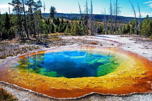 Morning Glory Pool (by WorldofArun) Morning glory pool is considered the most beautiful pool and a must-see of Yellowstone National Park. Its colors are because of the existence of heat-thriving bacteria making a stunning display of hues. The delicate blue water is created by thermophilic bacteria, which thrive in the pool's searing heat. Over the years people threw coins, bottles and trash in the pool, reducing its flow and causing the red and orange bacteria to creep in from its edge, replacing the blue bacteria that thrive in the hotter water at the center of the pool.
