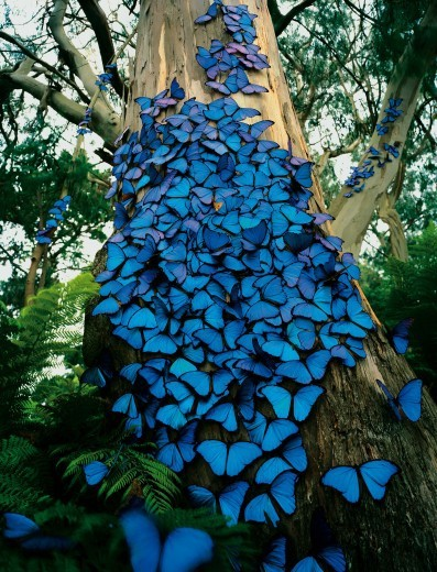 The butterfly tree (via Beautiful & Fanciful)