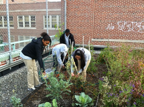 urbangreens:  highviewcreations submitted:  Students picking their first harvest back in the Autumn from their new Green Roof!  Sweet!