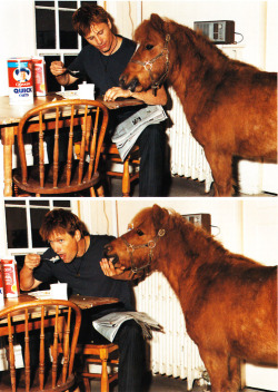 pony horse Viggo Mortensen