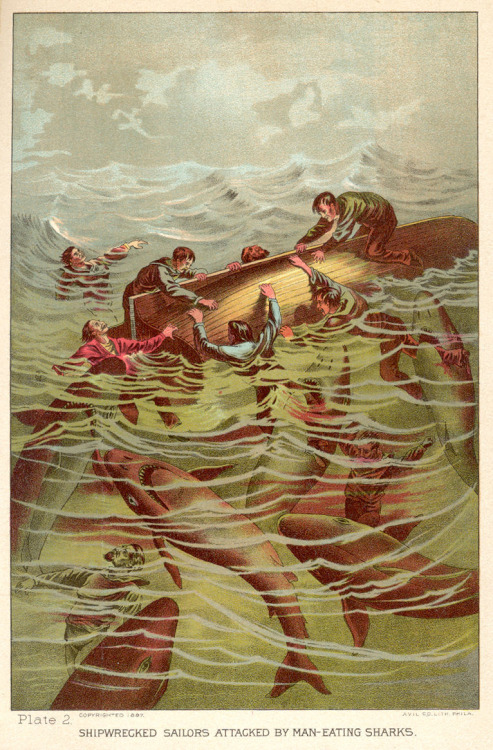 Shipwrecked sailors attacked by man-eating sharks. From Sea and Land by J. W. Buel, 1889.Found here.