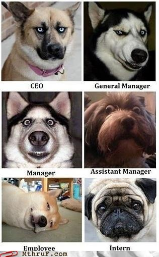corporate doggie ladder