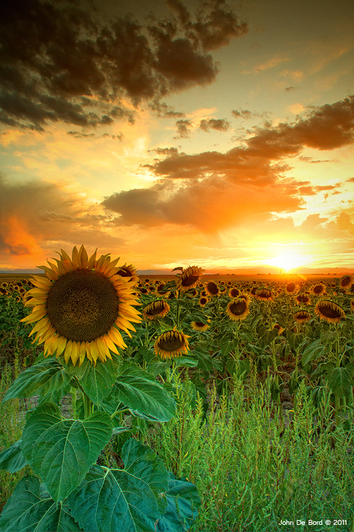 landscapelifescape:  Eastern plains, Colorado, USA The Sunworshiper by kkart   I wanna go here!