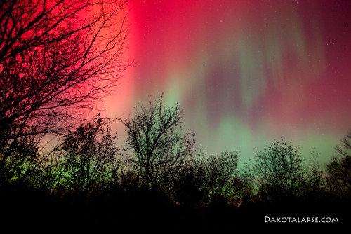 A rare appearance by the northern lights in the skies over  Chicago, October 24, 2011.