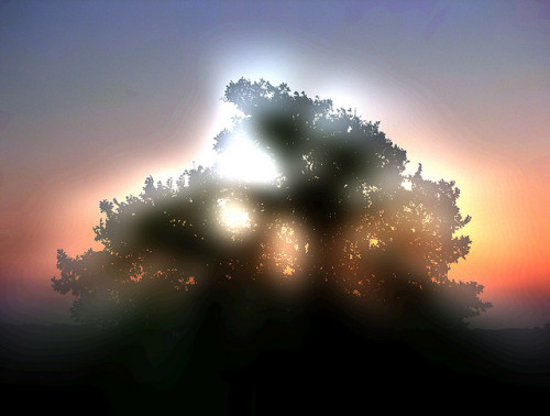 Tree of Light on Flickr.
