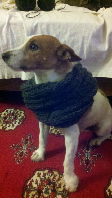Cooper modeling the cowl I made. Handsome little devil isn't he?