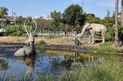 geologise:   La Brea Tar Pits (by Hollywood History Tours)  The La Brea Tar Pits are LA's direct link to prehistory—natural asphalt seeps that trapped unsuspecting prehistoric animals, creating a huge treasure trove of fossils dating back to the last ice age.