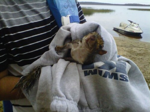 i saved a squirrel from drowning ~