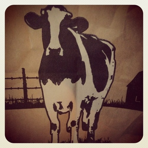 Mooo.  (Taken with instagram)