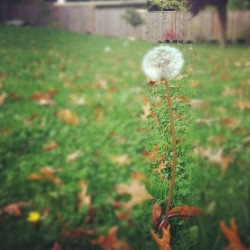 #iphonography #weed #plant #fall (Taken with instagram)