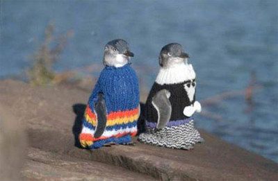 Penguins in sweaters. Ahhhhh