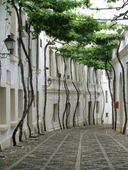cool street trees and canopy