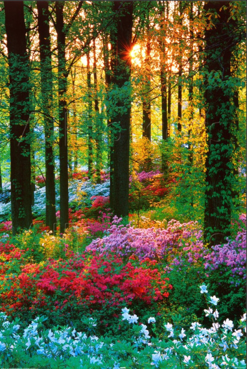 Forest flowers (via AllPosters.com)