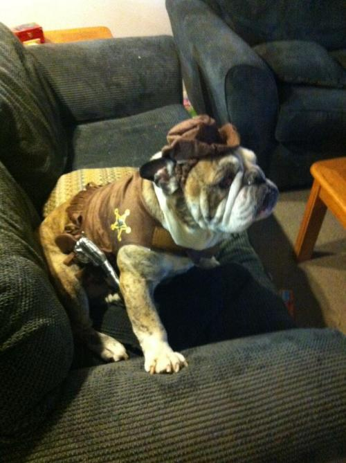 this is my dog. granted not a puppy. but a dog in a costume is just adorable.