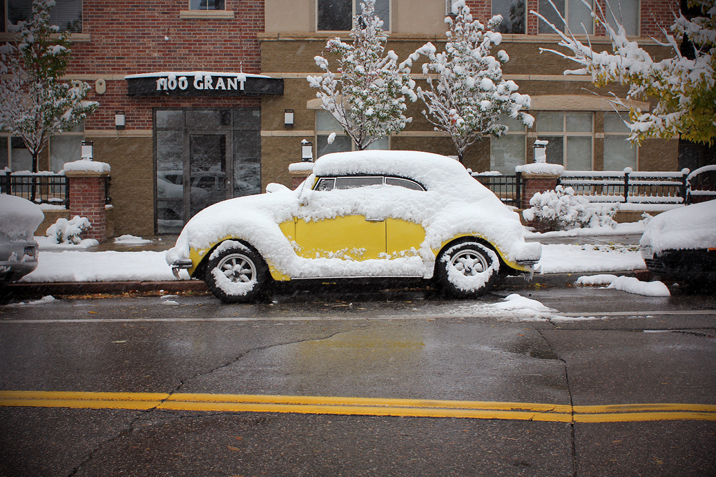 Snowy Bug, 2011 Denver