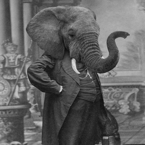 Elephant Man (The Manager of Relevant Elephant) via laughingsquid:  Grand Ole Bestiary, Retro Style Prints of Anthropomorphic Animal Heads on Human Bodies