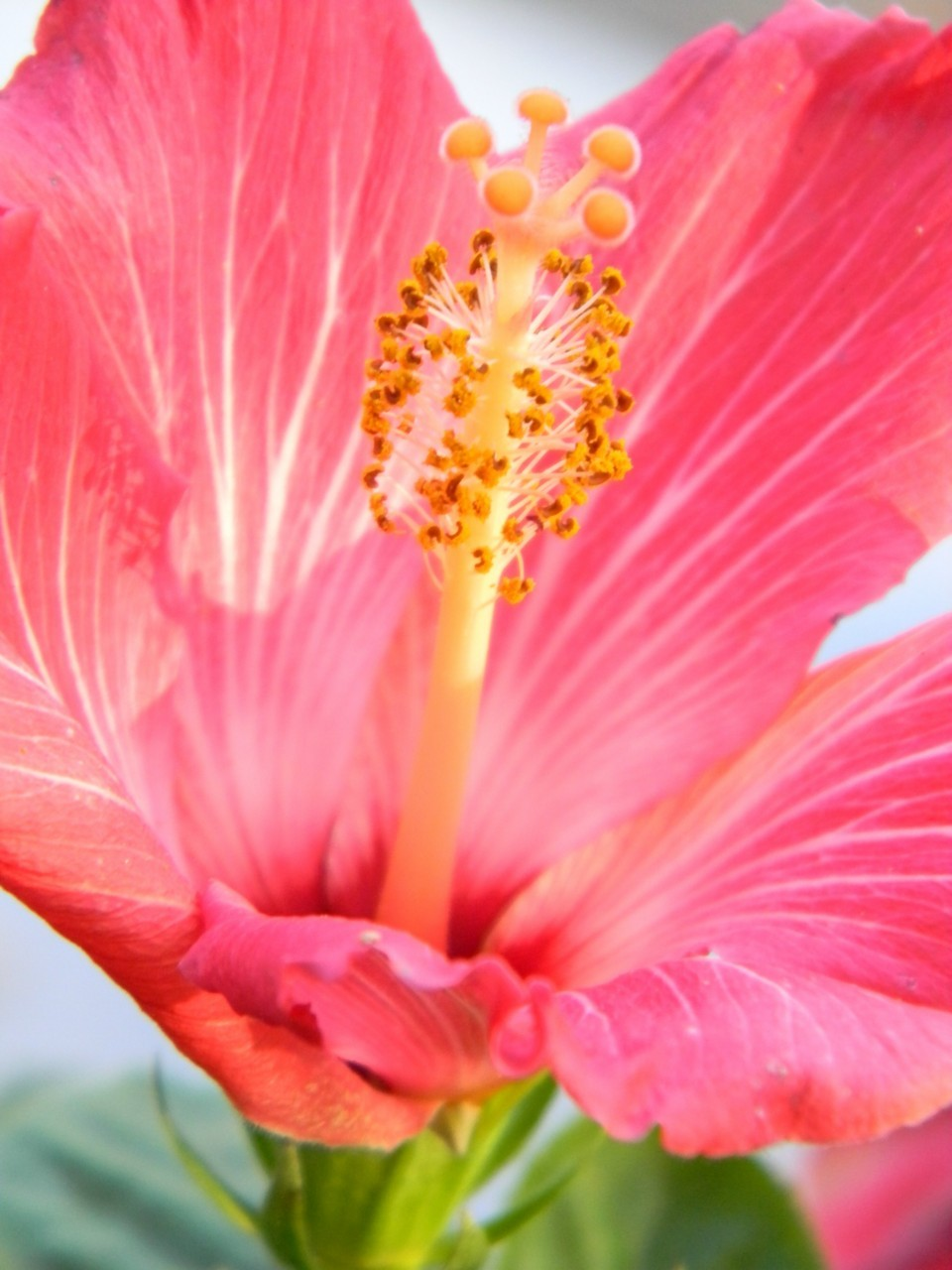 t-e-l-e-p-a-t-h-y:  s-e-q-u-i-n:  hibiscus  Full of so much life.