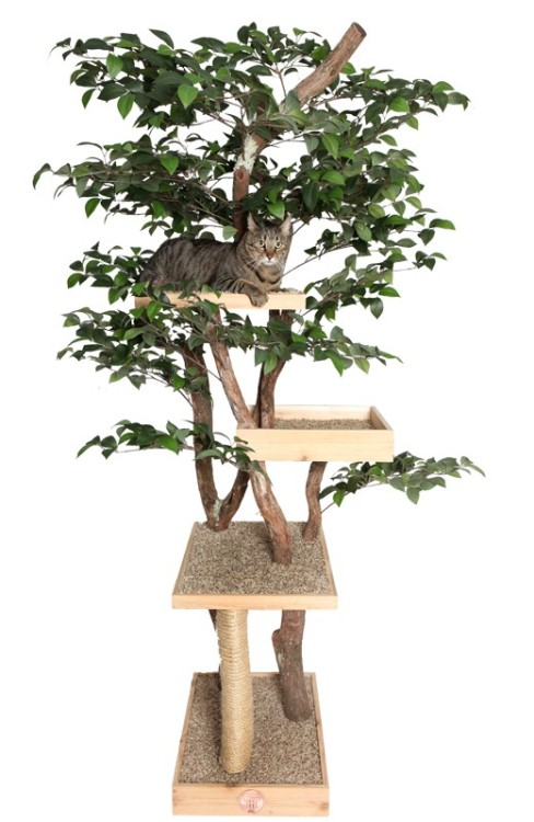 OMG! My cats would go nuts for this cat tree!