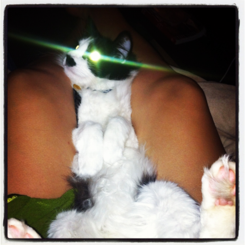 Fred is a LAZER CAT