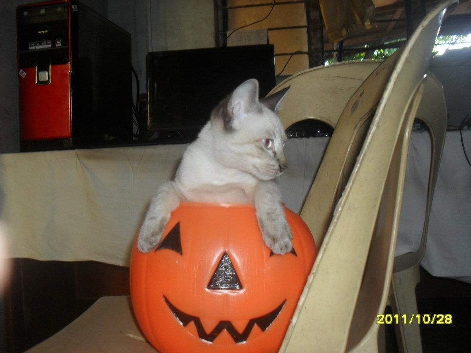 happy halloween guys ! :) its my kittY , SHAMCEY !