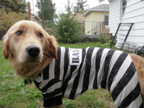 our little convict