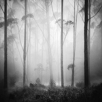 Forest Dream by Hengki Koentjoro on Flickr.