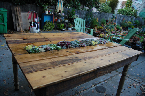 Today's how-to: Transform a pallet into a (succulent-filled)  table. Even the legs for this garden-table project are repurposed: they  were found at a garage sale.     Details: DIY Succulent Pallet Table | Far Out Flora.