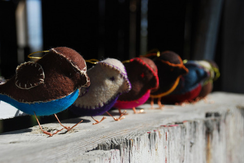 jasmintea:  Felt Birds on a Barn Window (3/4 Shot) by DavidNBrooks on Flickr.