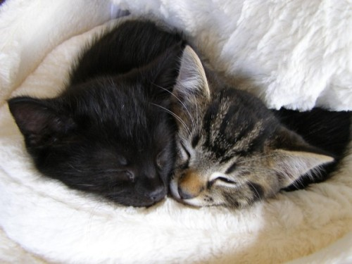 lovesogolden:  Kitties in love.